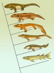 evolution-fish